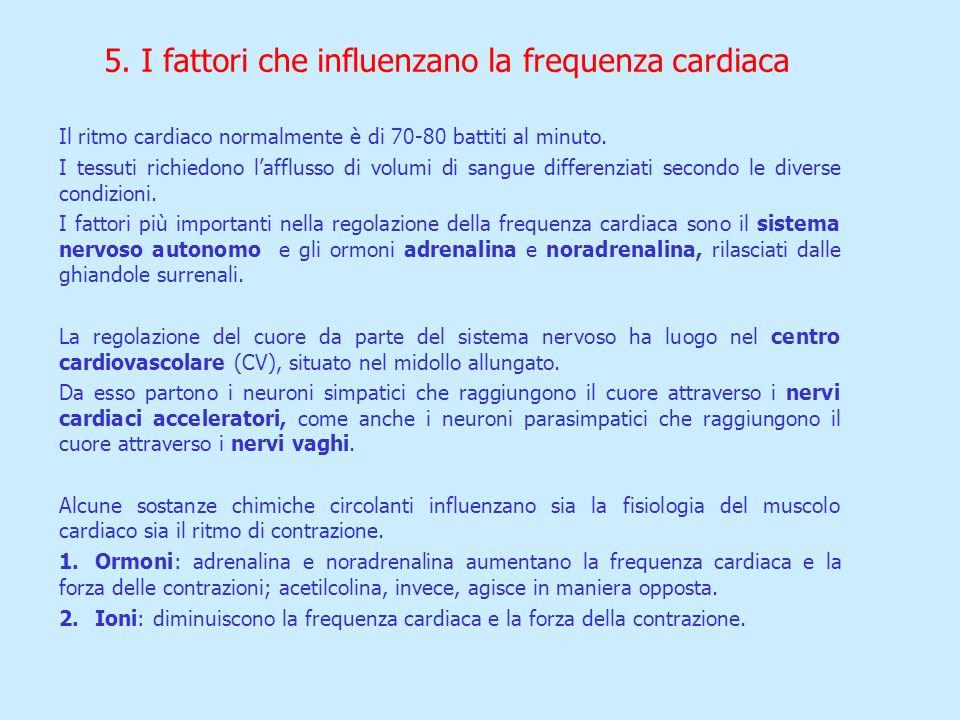 5. I fattori che influenzano la frequenza cardiaca