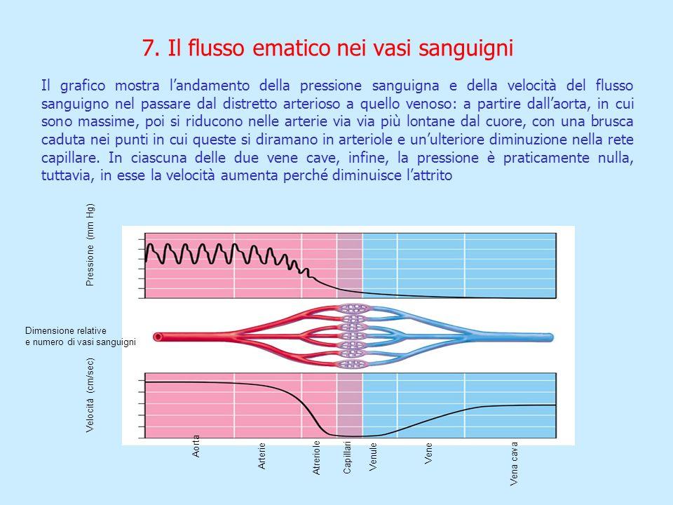 7. Il flusso ematico nei vasi sanguigni
