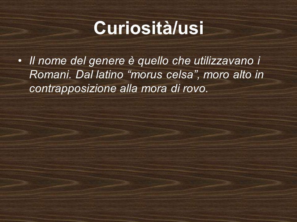 Curiosità/usi Il nome del genere è quello che utilizzavano i Romani.