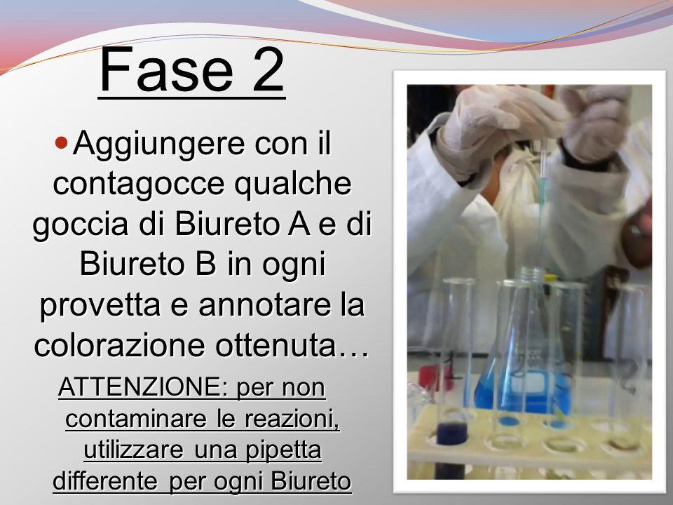 Fase 2 Aggiungere con il contagocce qualche goccia di Biureto A e di Biureto B in ogni provetta e annotare la colorazione ottenuta…