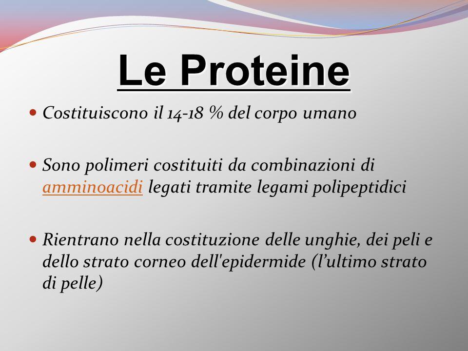 Le Proteine Costituiscono il 14-18 % del corpo umano