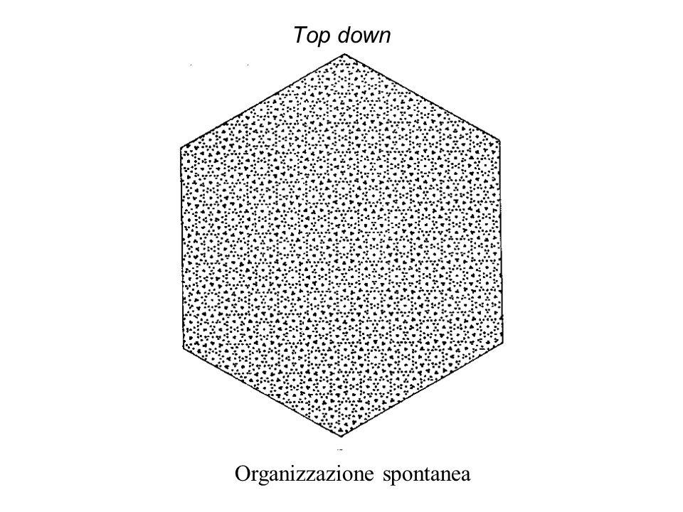 Top down Organizzazione spontanea