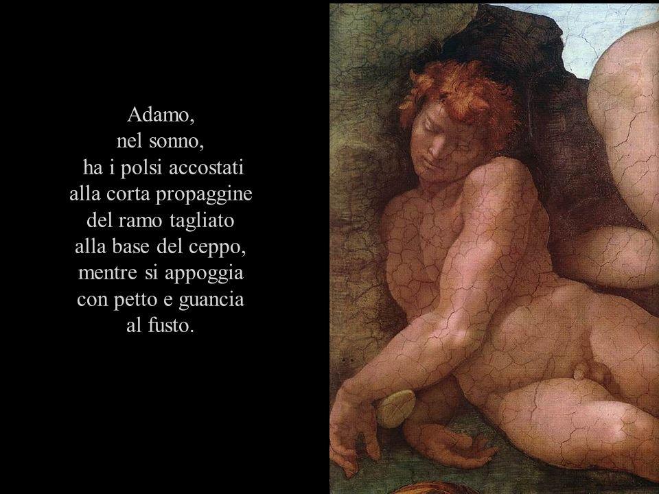 Adamo, nel sonno, ha i polsi accostati. alla corta propaggine. del ramo tagliato. alla base del ceppo,