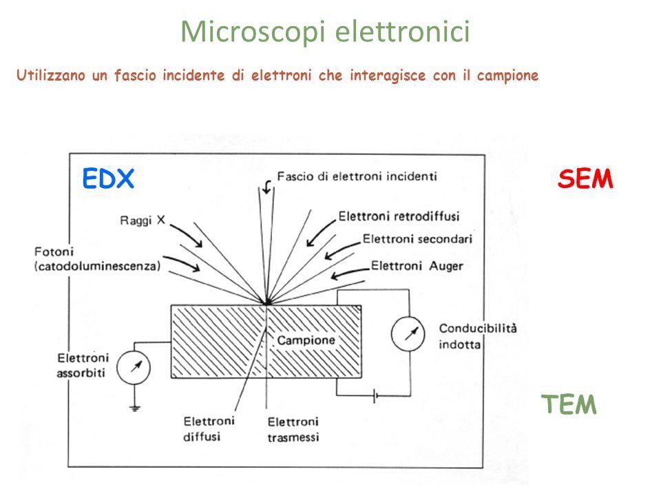 Microscopi elettronici
