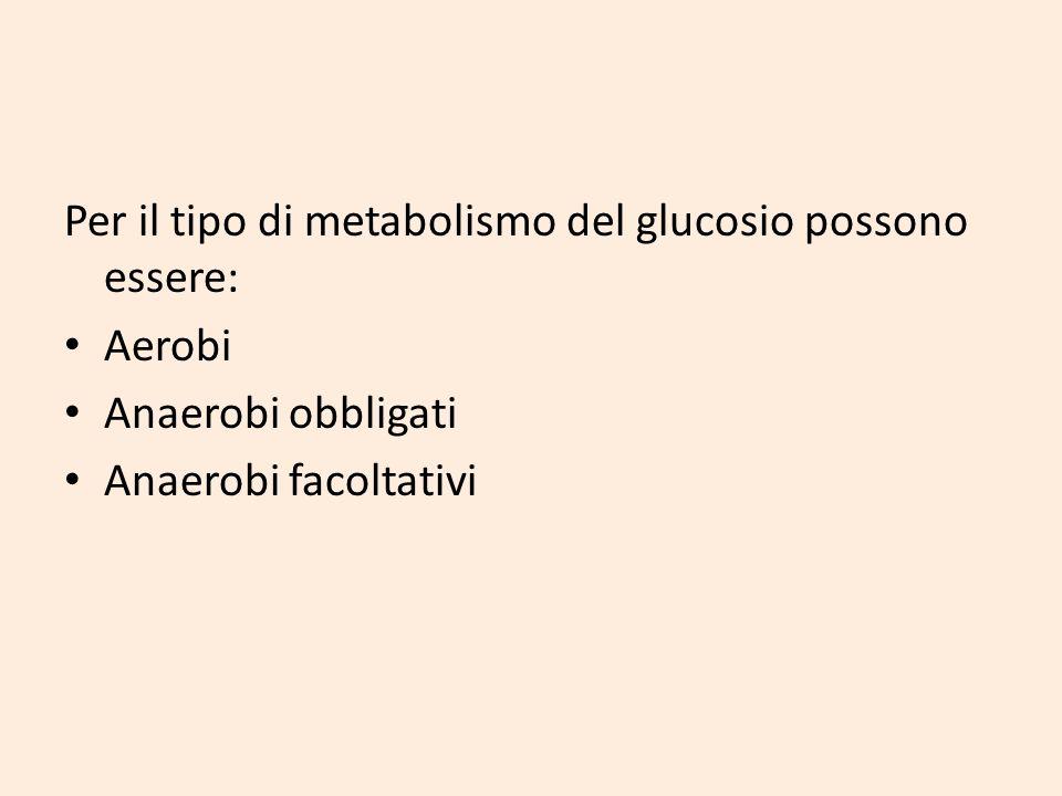 Per il tipo di metabolismo del glucosio possono essere: