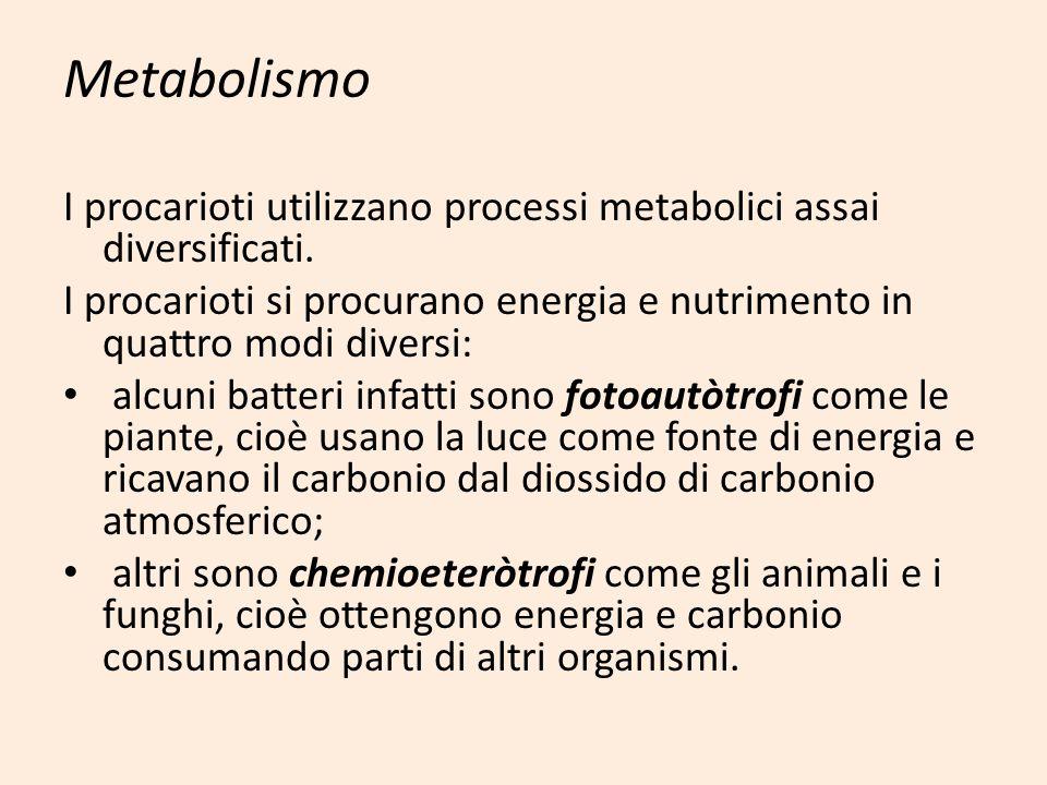 Metabolismo I procarioti utilizzano processi metabolici assai diversificati. I procarioti si procurano energia e nutrimento in quattro modi diversi: