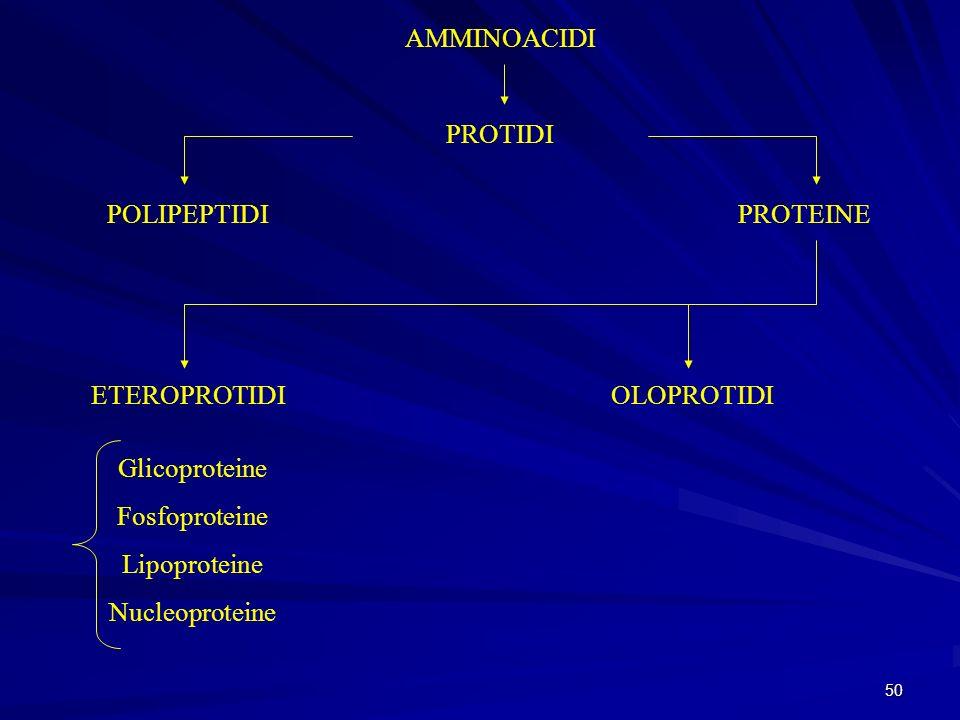 AMMINOACIDI PROTIDI. POLIPEPTIDI. PROTEINE. ETEROPROTIDI. OLOPROTIDI. Glicoproteine. Fosfoproteine.