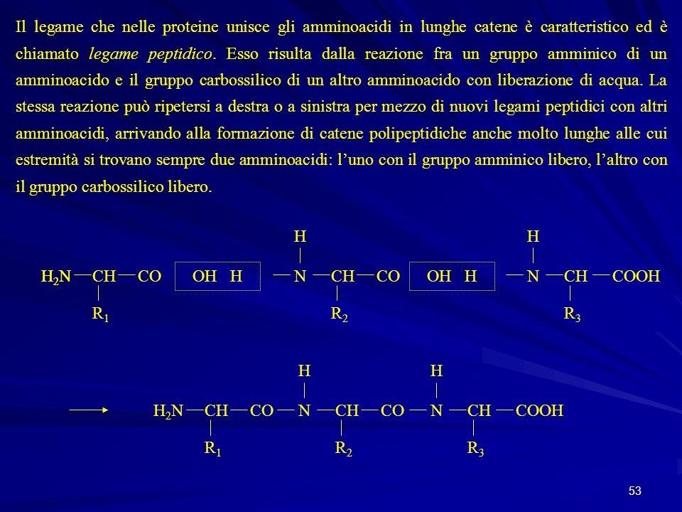 Il legame che nelle proteine unisce gli amminoacidi in lunghe catene è caratteristico ed è chiamato legame peptidico. Esso risulta dalla reazione fra un gruppo amminico di un amminoacido e il gruppo carbossilico di un altro amminoacido con liberazione di acqua. La stessa reazione può ripetersi a destra o a sinistra per mezzo di nuovi legami peptidici con altri amminoacidi, arrivando alla formazione di catene polipeptidiche anche molto lunghe alle cui estremità si trovano sempre due amminoacidi: l'uno con il gruppo amminico libero, l'altro con il gruppo carbossilico libero.