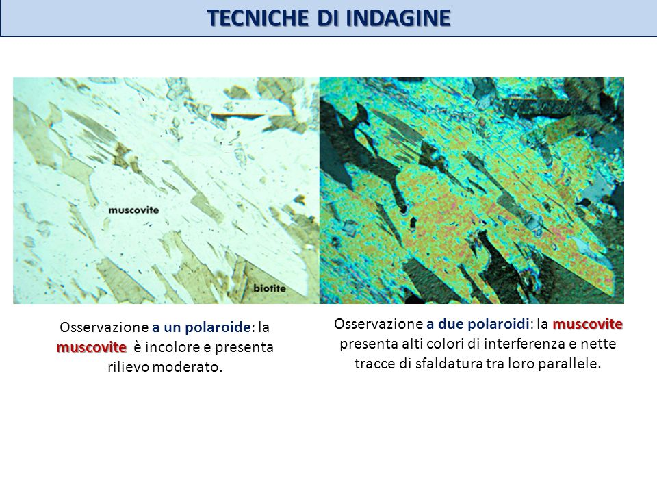TECNICHE DI INDAGINE Osservazione a un polaroide: la muscovite è incolore e presenta rilievo moderato.