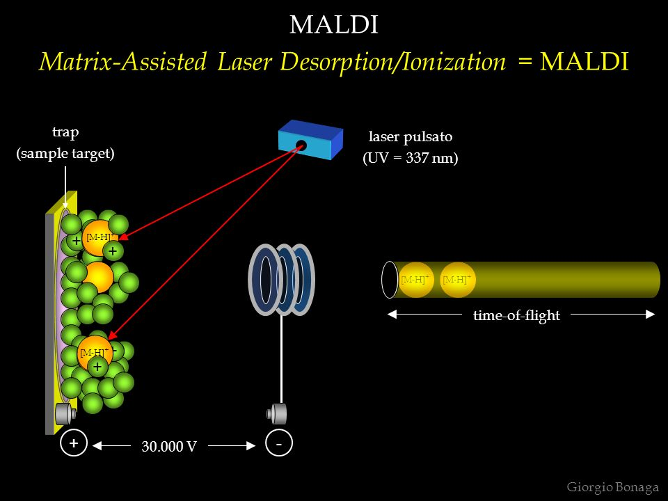 Matrix-Assisted Laser Desorption/Ionization = MALDI