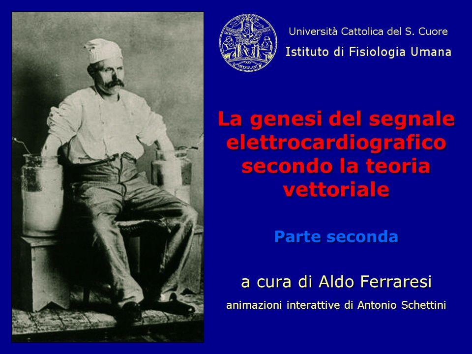 La genesi del segnale elettrocardiografico secondo la teoria vettoriale Parte seconda a cura di Aldo Ferraresi .