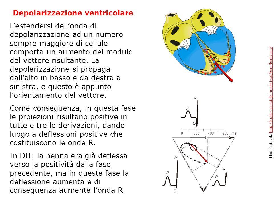 Depolarizzazione ventricolare