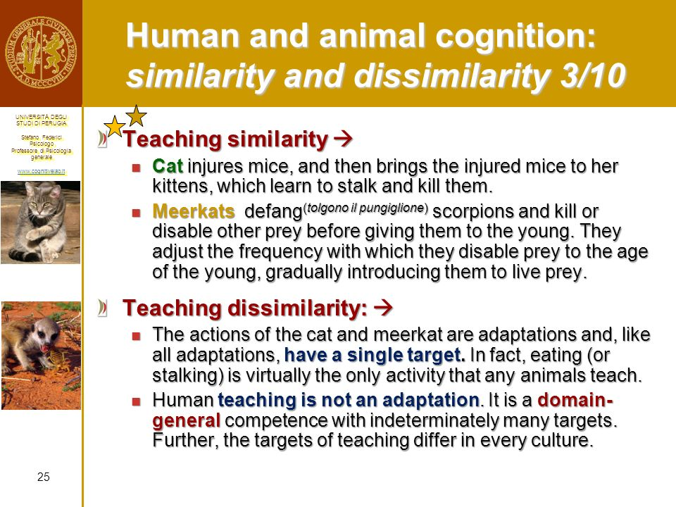 Human and animal cognition: similarity and dissimilarity 3/10