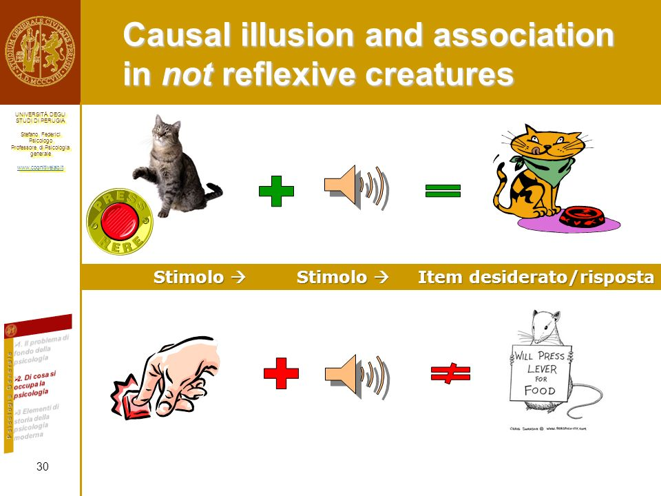 Causal illusion and association in not reflexive creatures