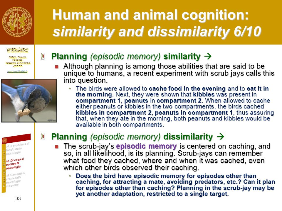 Human and animal cognition: similarity and dissimilarity 6/10