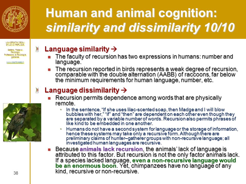 Human and animal cognition: similarity and dissimilarity 10/10