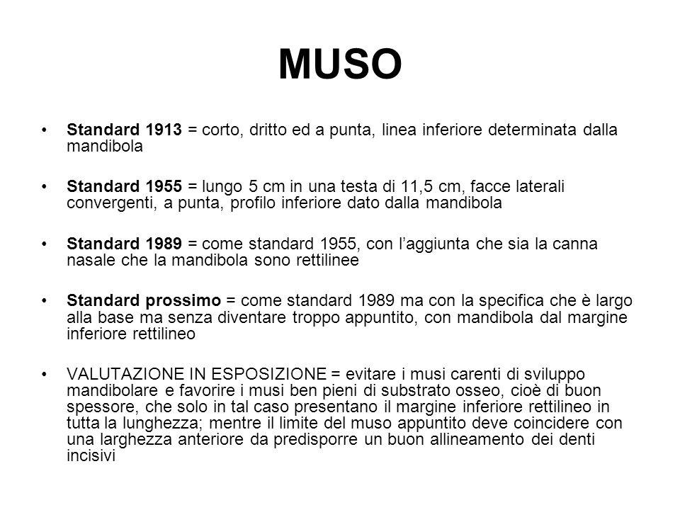 MUSO Standard 1913 = corto, dritto ed a punta, linea inferiore determinata dalla mandibola.