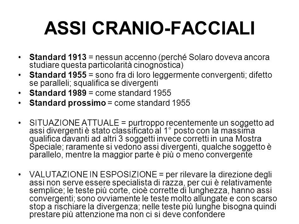 ASSI CRANIO-FACCIALI Standard 1913 = nessun accenno (perché Solaro doveva ancora studiare questa particolarità cinognostica)
