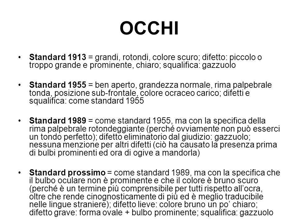 OCCHI Standard 1913 = grandi, rotondi, colore scuro; difetto: piccolo o troppo grande e prominente, chiaro; squalifica: gazzuolo.