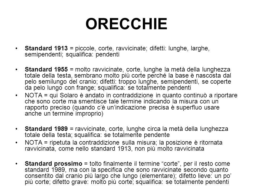ORECCHIE Standard 1913 = piccole, corte, ravvicinate; difetti: lunghe, larghe, semipendenti; squalifica: pendenti.