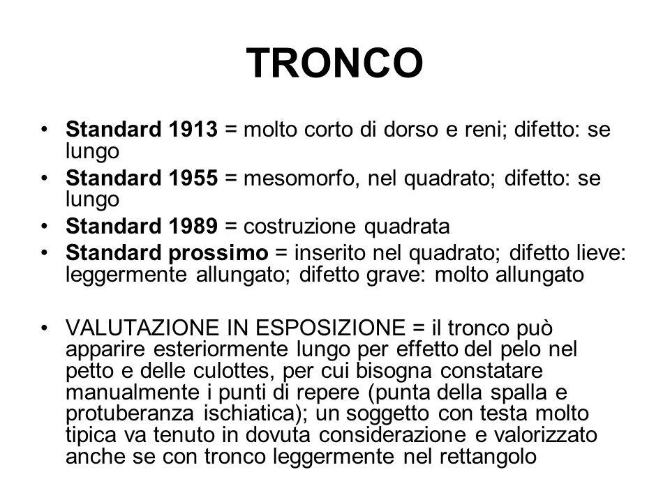 TRONCO Standard 1913 = molto corto di dorso e reni; difetto: se lungo