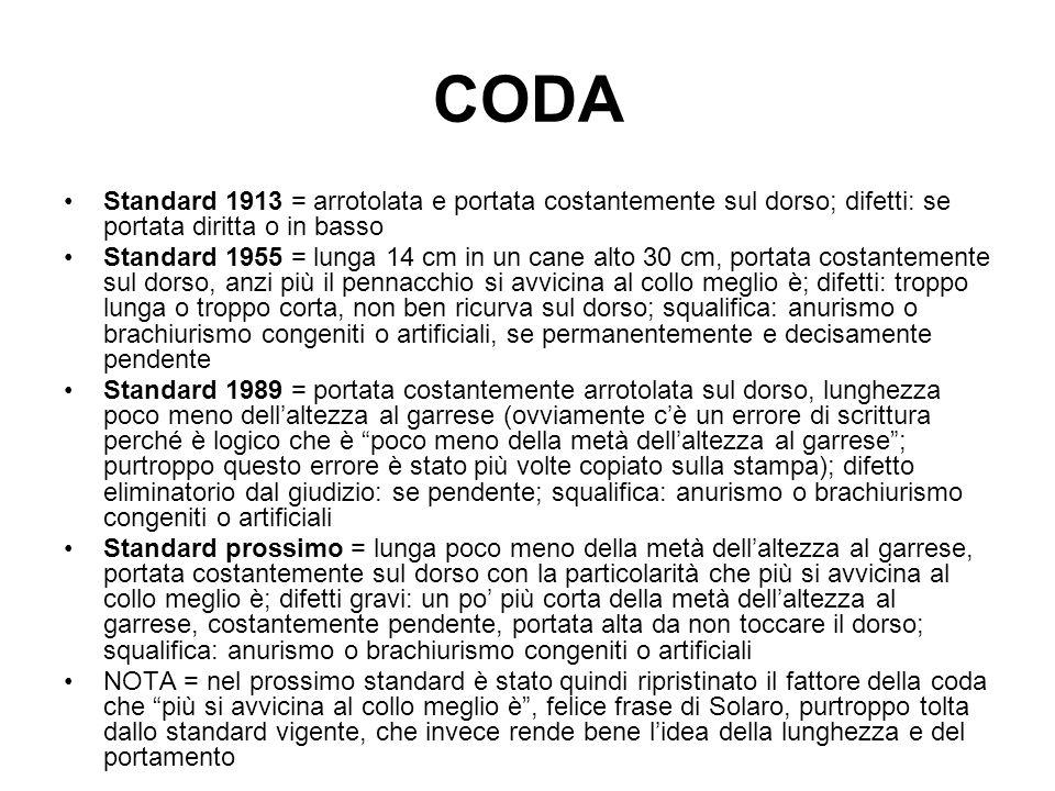 CODA Standard 1913 = arrotolata e portata costantemente sul dorso; difetti: se portata diritta o in basso.