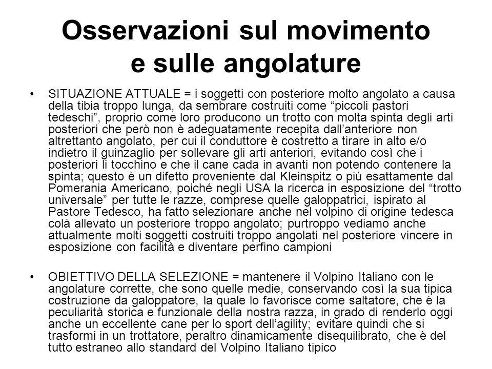 Osservazioni sul movimento e sulle angolature
