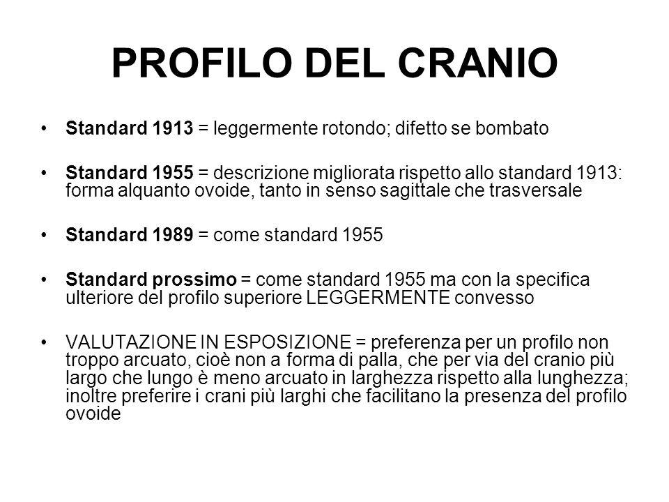 PROFILO DEL CRANIO Standard 1913 = leggermente rotondo; difetto se bombato.