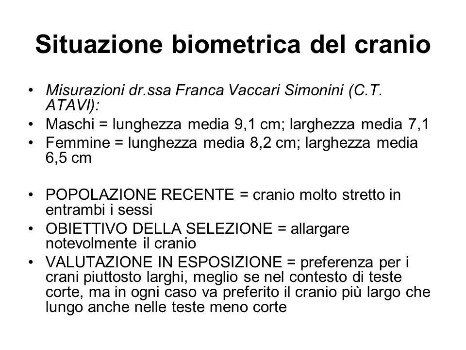 Situazione biometrica del cranio