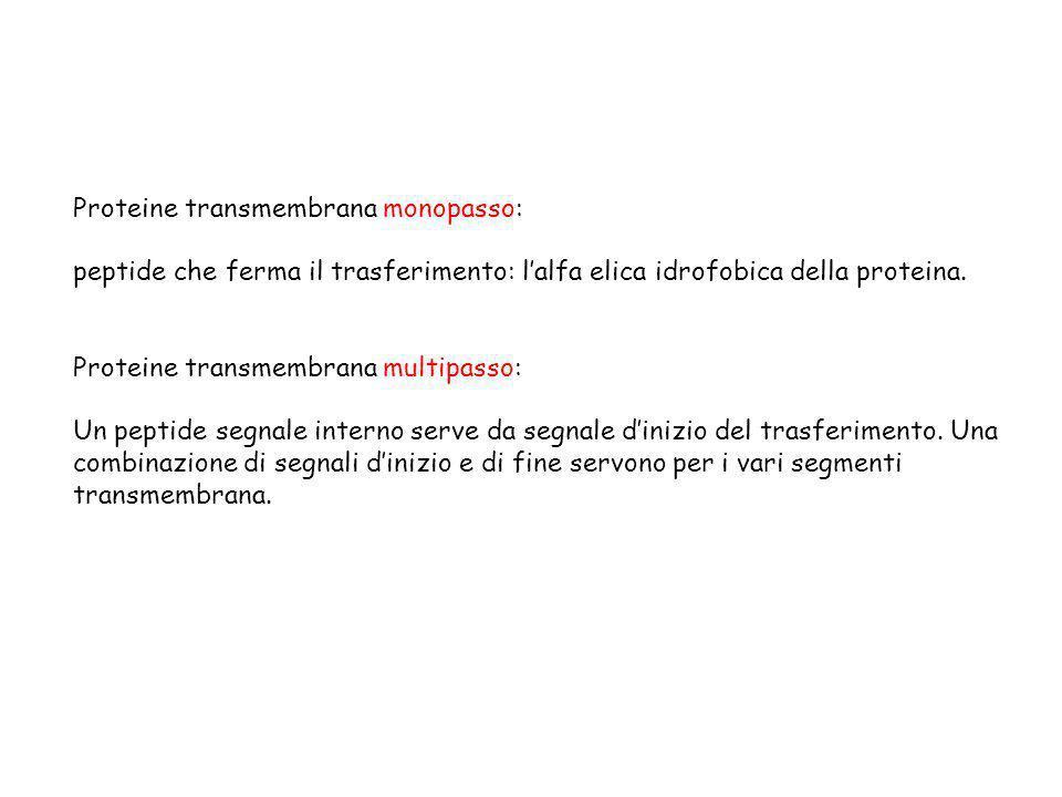 Proteine transmembrana monopasso: