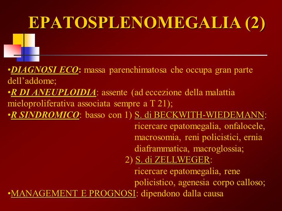 EPATOSPLENOMEGALIA (2)