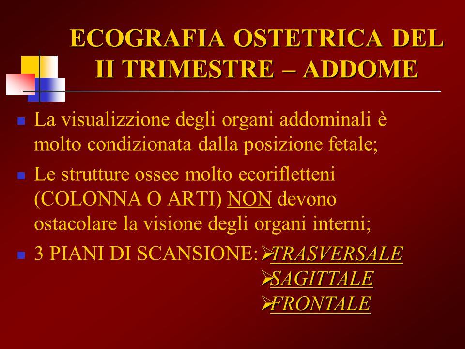 ECOGRAFIA OSTETRICA DEL II TRIMESTRE – ADDOME