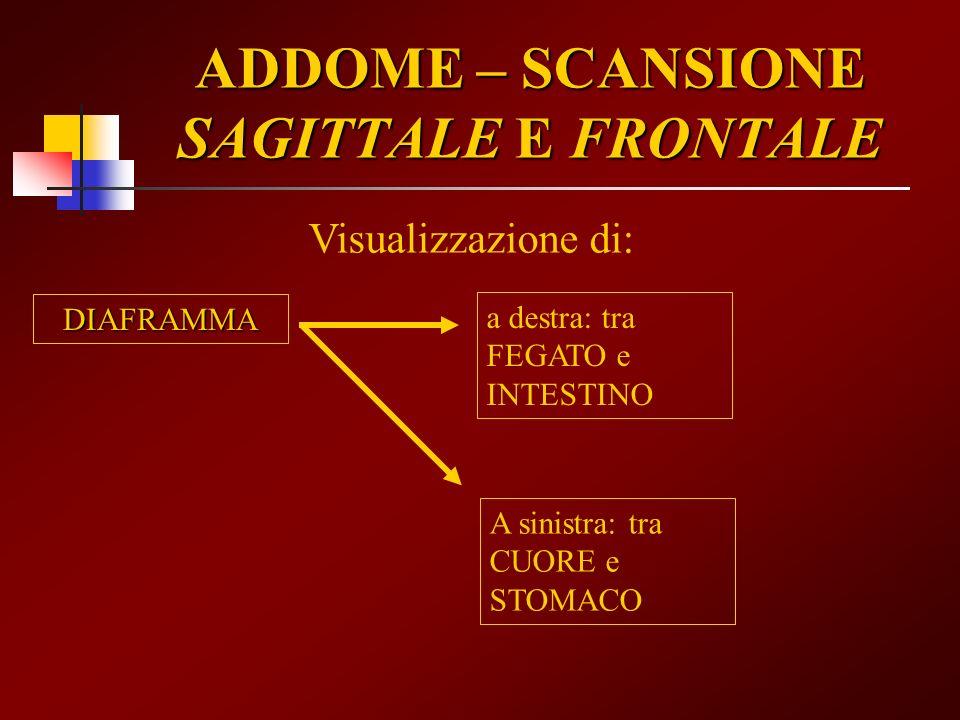 ADDOME – SCANSIONE SAGITTALE E FRONTALE