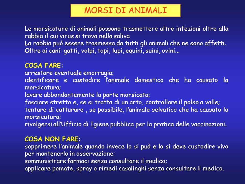 MORSI DI ANIMALI Le morsicature di animali possono trasmettere altre infezioni oltre alla rabbia il cui virus si trova nella saliva.