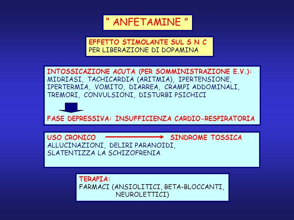 ANFETAMINE EFFETTO STIMOLANTE SUL S N C