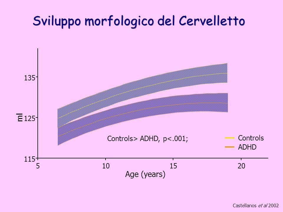 Sviluppo morfologico del Cervelletto