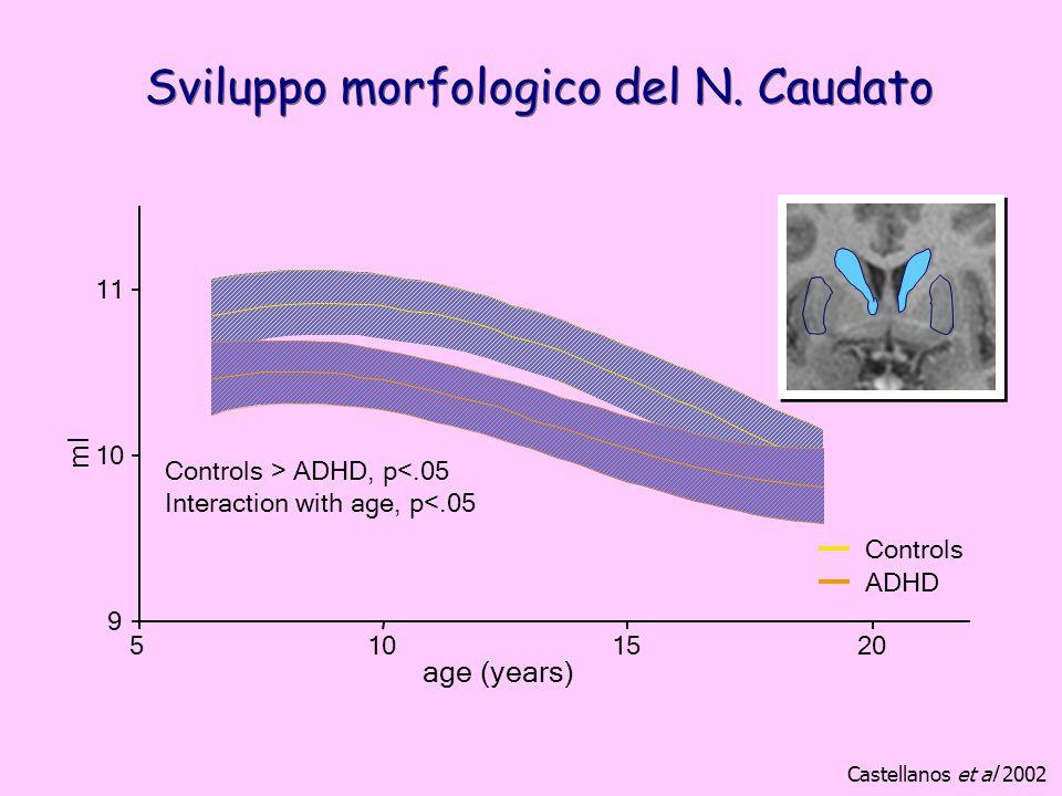 Sviluppo morfologico del N. Caudato