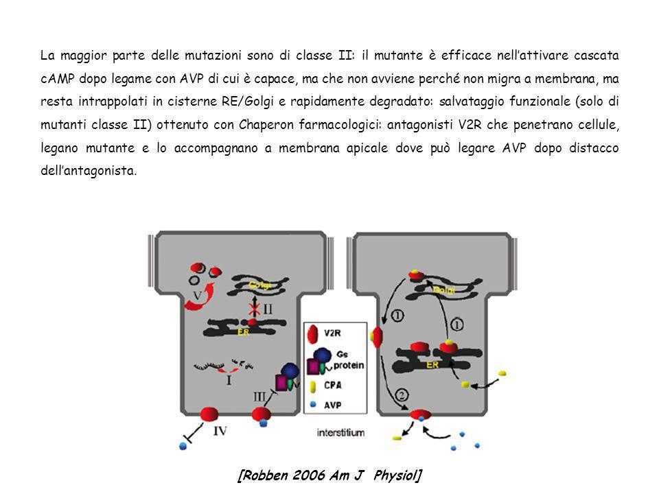 La maggior parte delle mutazioni sono di classe II: il mutante è efficace nell'attivare cascata cAMP dopo legame con AVP di cui è capace, ma che non avviene perché non migra a membrana, ma resta intrappolati in cisterne RE/Golgi e rapidamente degradato: salvataggio funzionale (solo di mutanti classe II) ottenuto con Chaperon farmacologici: antagonisti V2R che penetrano cellule, legano mutante e lo accompagnano a membrana apicale dove può legare AVP dopo distacco dell'antagonista.