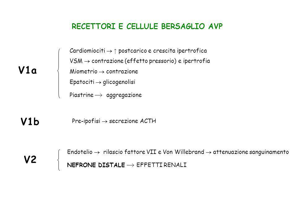 RECETTORI E CELLULE BERSAGLIO AVP