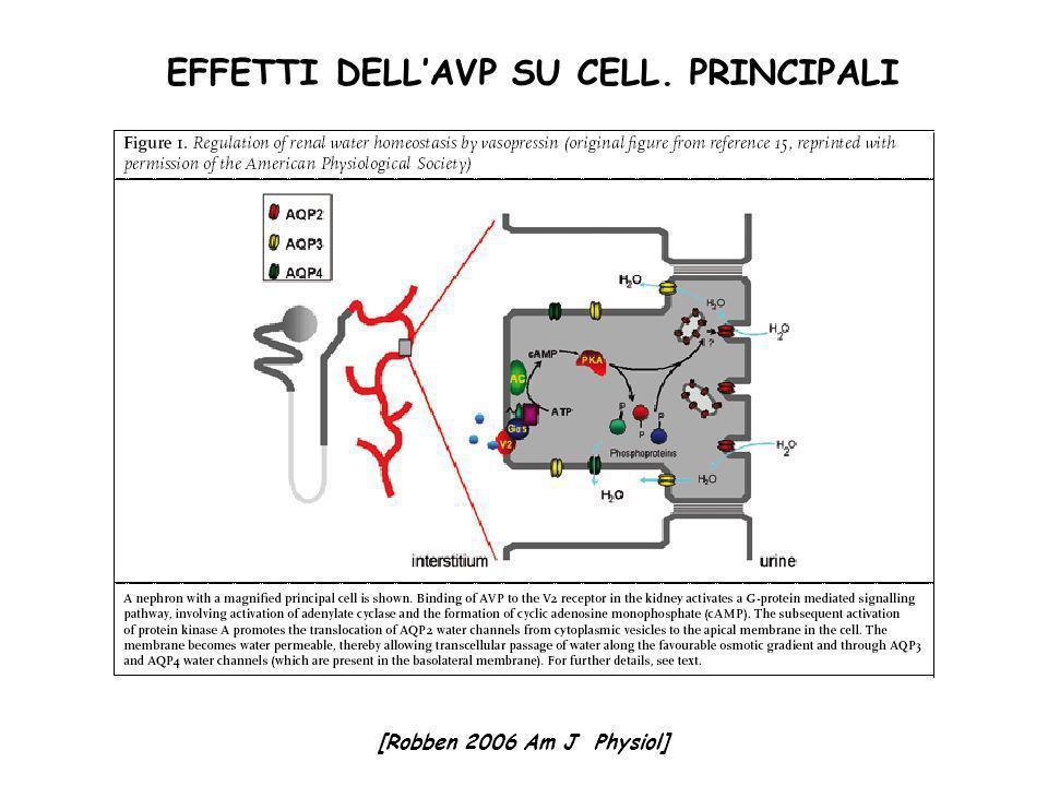 EFFETTI DELL'AVP SU CELL. PRINCIPALI