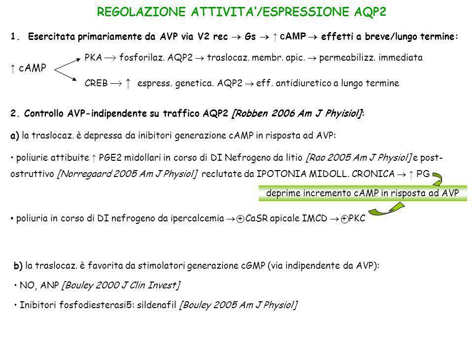 REGOLAZIONE ATTIVITA'/ESPRESSIONE AQP2