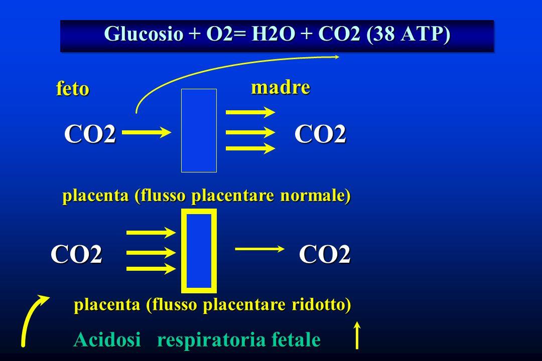 Glucosio + O2= H2O + CO2 (38 ATP)