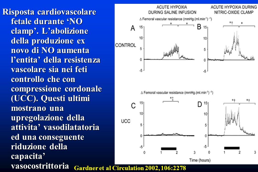 Risposta cardiovascolare fetale durante 'NO clamp'