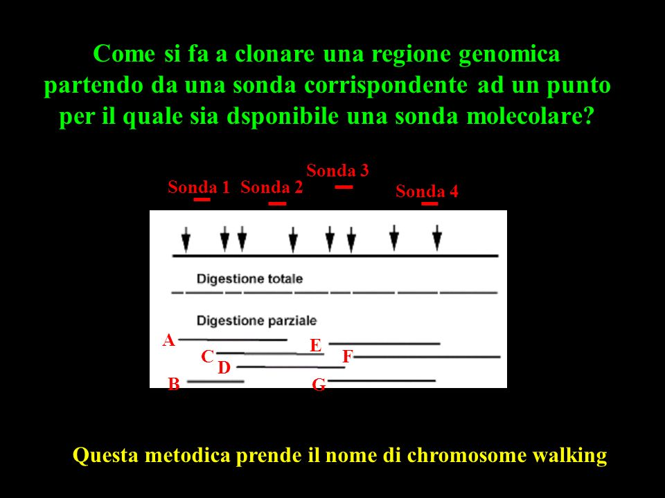 Come si fa a clonare una regione genomica partendo da una sonda corrispondente ad un punto per il quale sia dsponibile una sonda molecolare