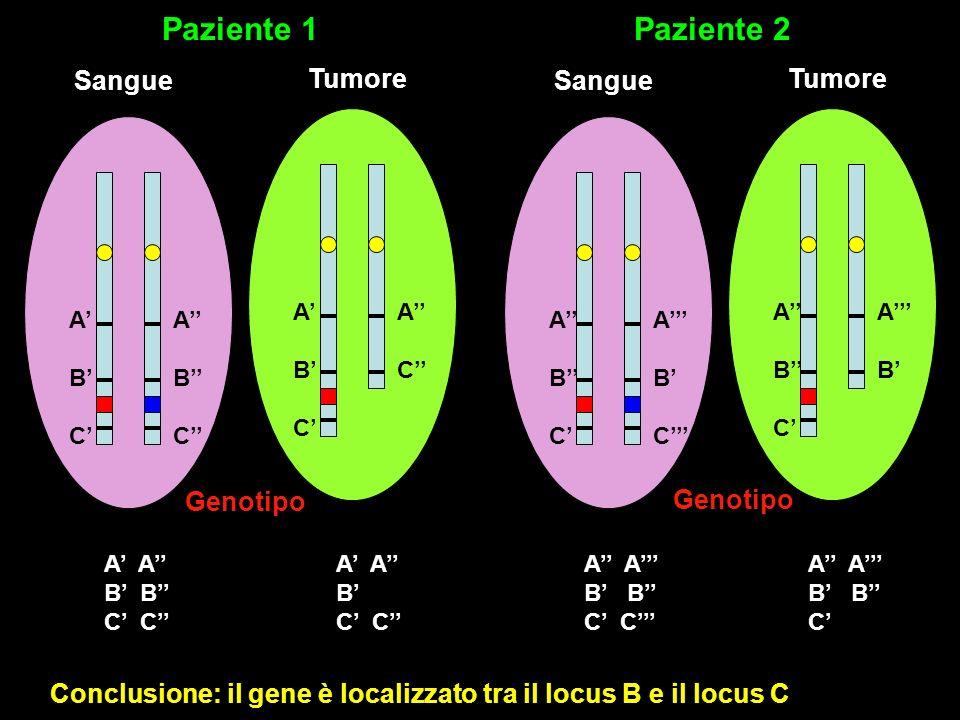 Paziente 1 Paziente 2 Sangue Tumore Sangue Tumore Genotipo Genotipo