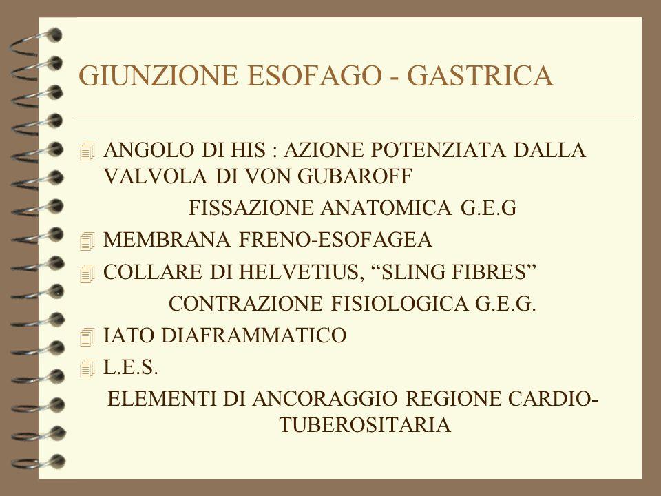 GIUNZIONE ESOFAGO - GASTRICA