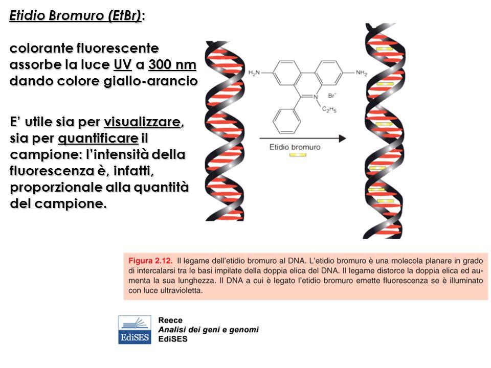 Etidio Bromuro (EtBr):