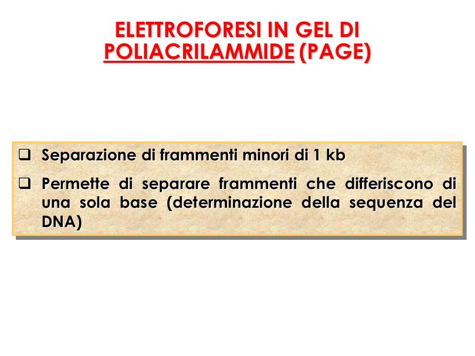 ELETTROFORESI IN GEL DI POLIACRILAMMIDE (PAGE)