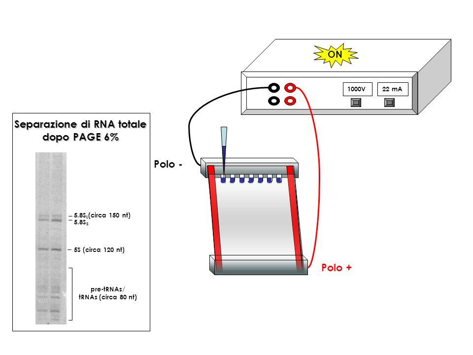 Separazione di RNA totale