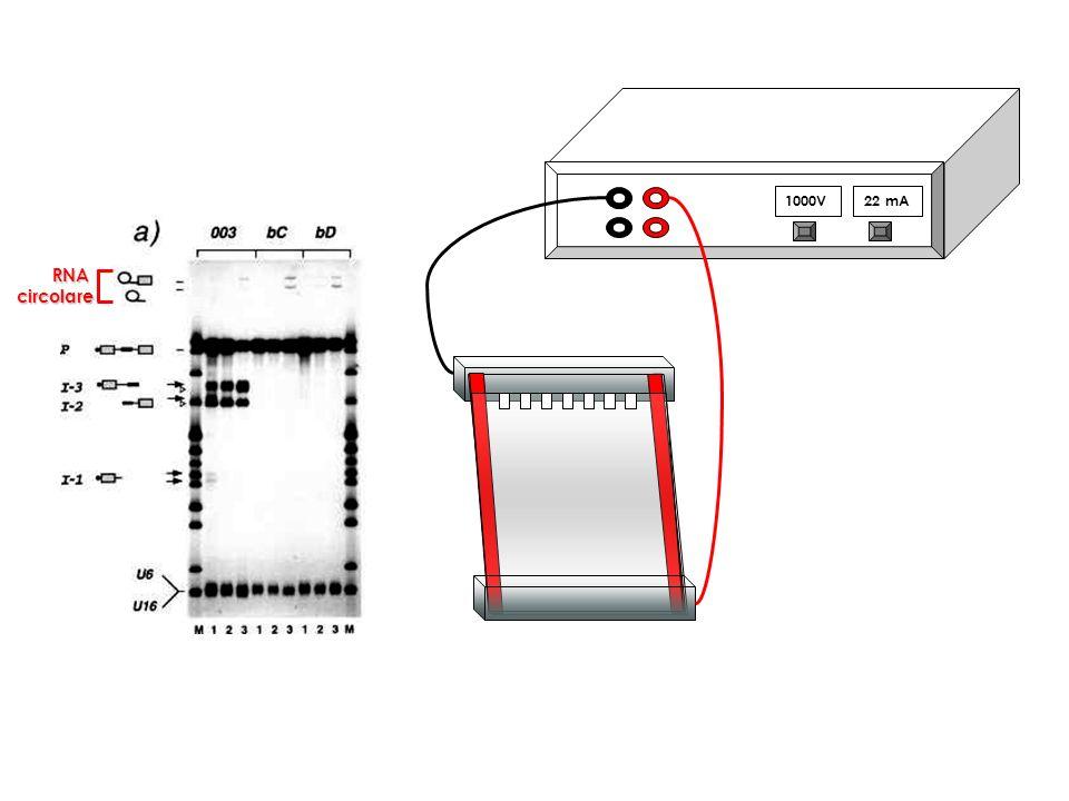 1000V 22 mA RNA circolare